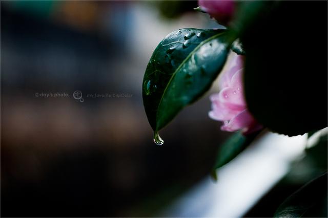 雨上がりの朝_e0117517_1961980.jpg