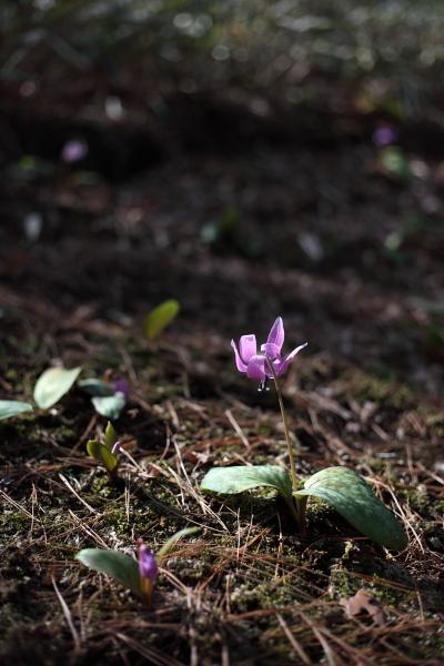 殿ヶ谷戸公園で春うらら・・・_c0162926_03427100.jpg