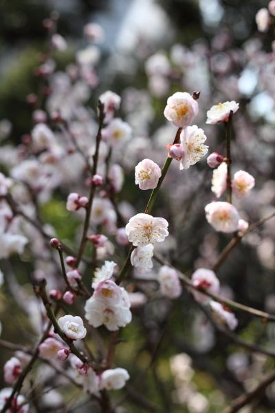 殿ヶ谷戸公園で春うらら・・・_c0162926_034956.jpg