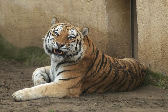 Erlebnis-Zoo Hannover_a0091329_22393030.jpg