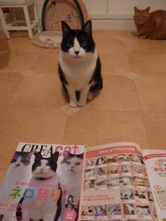 CREAcatクレアキャット掲載猫 空しぇる編。_a0143140_21231218.jpg
