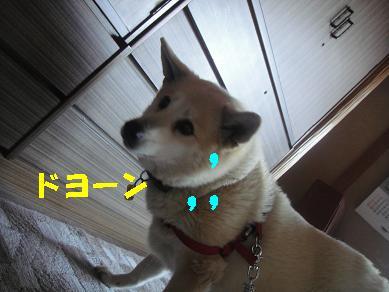 c0211642_2242254.jpg