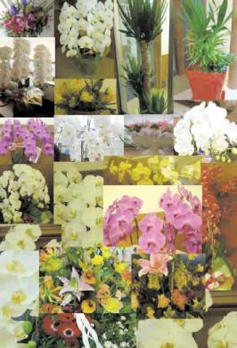 沢山のお花ありがとうございます!_a0115956_17204449.jpg
