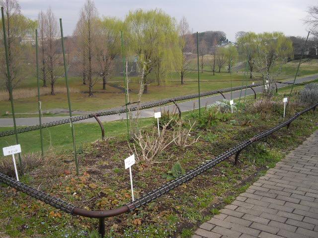 春まだ遠し、ハーブ畑_d0116059_11111997.jpg