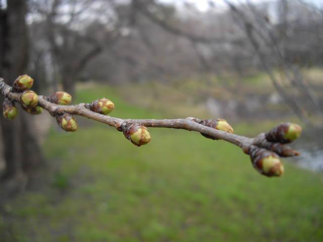 春まだ遠し、ハーブ畑_d0116059_11145273.jpg