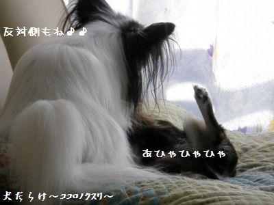 e0059267_1324277.jpg