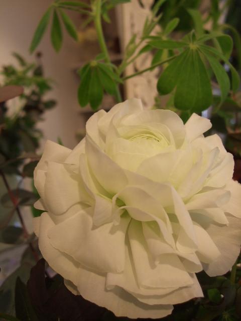 オークリーフ花の教室(望月さんの作品)_f0049672_16372689.jpg