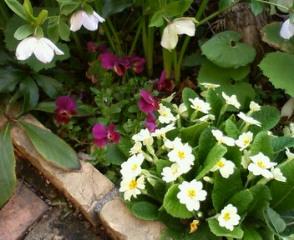 花壇がにぎやかに_b0011075_18335261.jpg