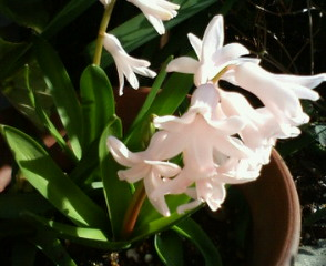 花壇がにぎやかに_b0011075_18394356.jpg