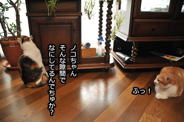 b0141397_1154640.jpg