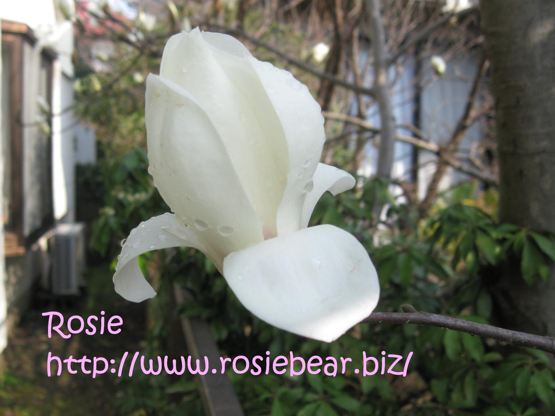 b0032098_8363830.jpg
