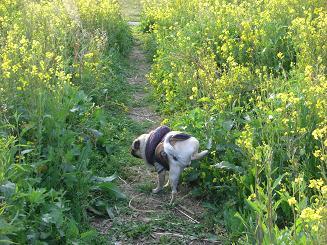 菜の花畑♪_a0159640_19573684.jpg