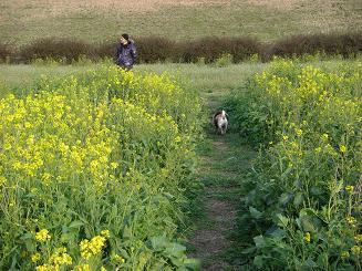 菜の花畑♪_a0159640_19581214.jpg