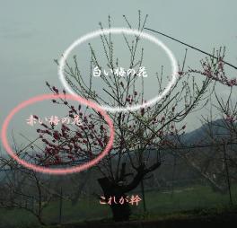 a0166266_19451175.jpg