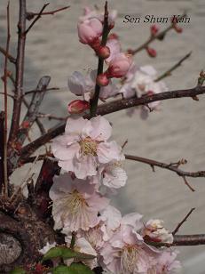 庭の花_a0164068_23372024.jpg