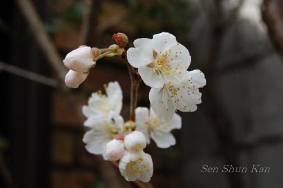 庭の花_a0164068_23391478.jpg