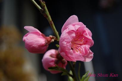 庭の花_a0164068_23403413.jpg