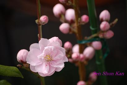 庭の花_a0164068_23414042.jpg