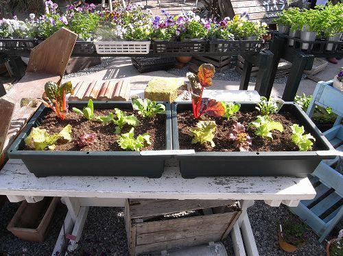 美味しい野菜・・・・・絵になる野菜・・・・・・・_b0137969_2154777.jpg