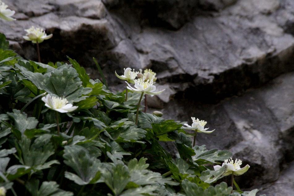 あ! 二輪草の花が_a0107574_845982.jpg