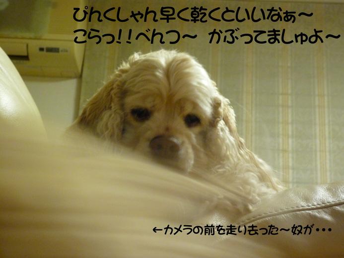 f0218182_9461964.jpg