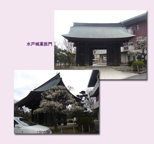 水戸 ウォーキング(1) 水戸城跡 弘道館_c0051105_0542691.jpg