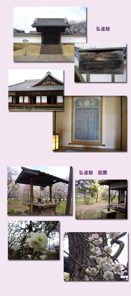 水戸 ウォーキング(1) 水戸城跡 弘道館_c0051105_1154339.jpg