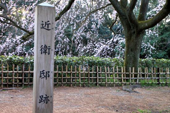 京都御苑 糸しだれ桜2_e0048413_22143291.jpg