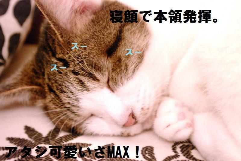f0212036_20431722.jpg