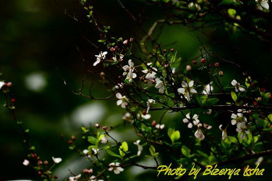 春の訪れ_d0086248_23414815.jpg