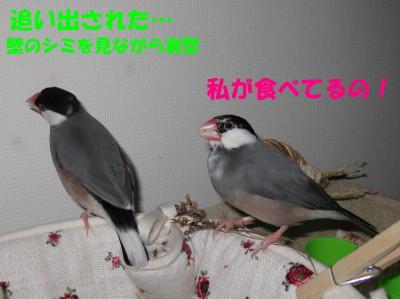 b0158061_20521096.jpg