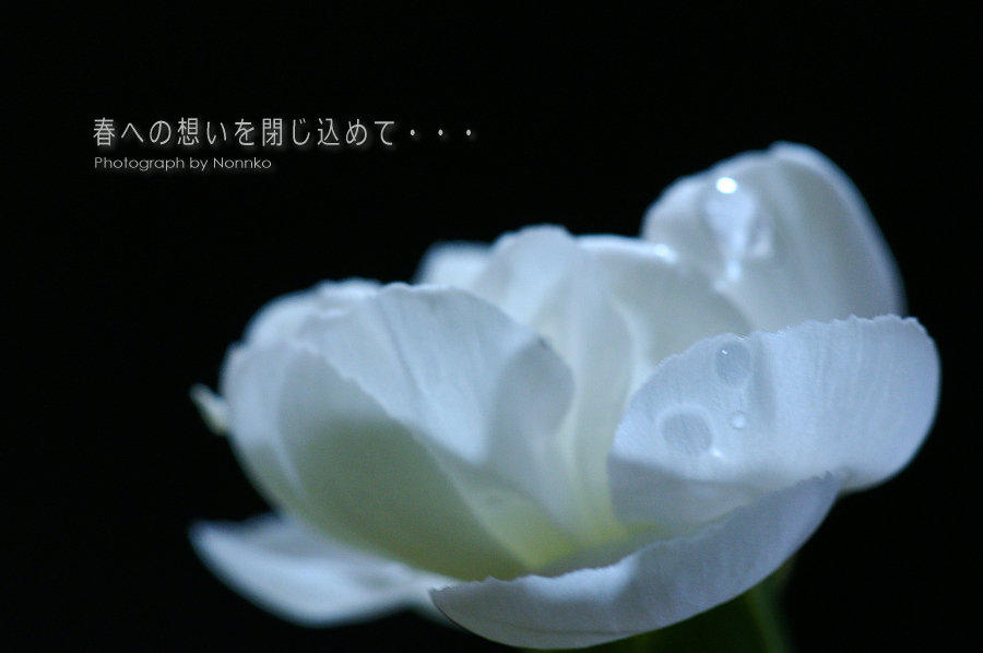 c0106977_15315034.jpg