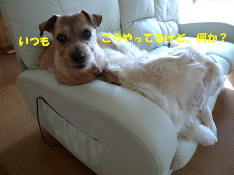 d0043478_03473.jpg