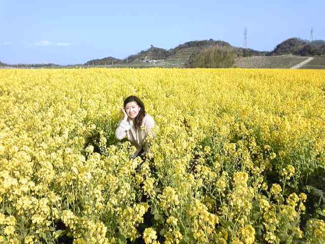 菜の花畑^^♪_e0142585_16472822.jpg
