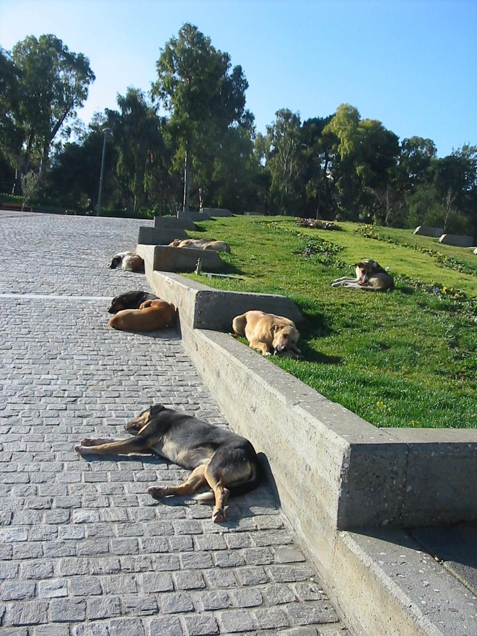 野良犬の昼寝みたいに。_e0171285_16553269.jpg