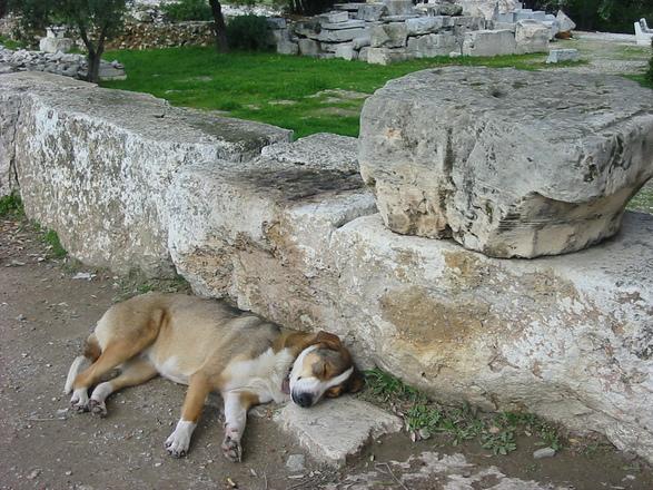 野良犬の昼寝みたいに。_e0171285_1655828.jpg