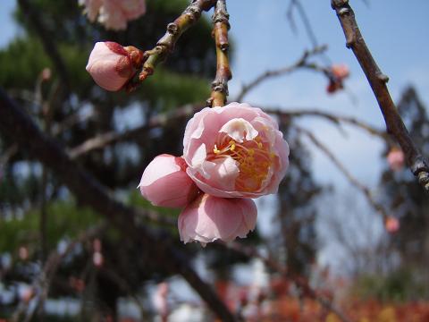 春の足音_b0074601_22442518.jpg
