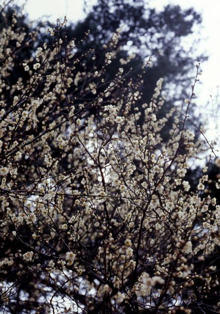春。_c0217406_23211659.jpg