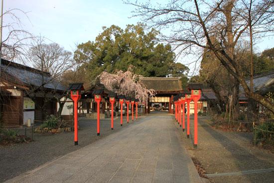 平野神社の桜 1_e0048413_16535339.jpg