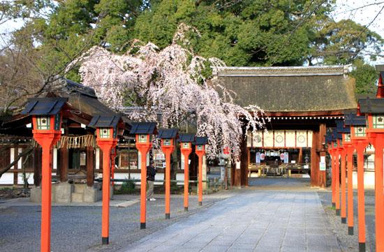 平野神社の桜 2、魁さくら_e0048413_17195327.jpg