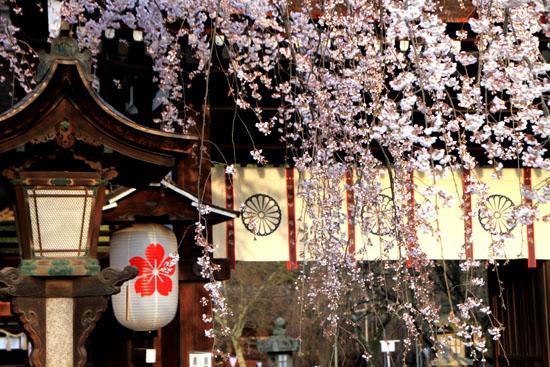 平野神社の桜 2、魁さくら_e0048413_17203324.jpg