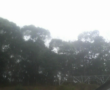 あいにくの雨_d0150722_1885746.jpg