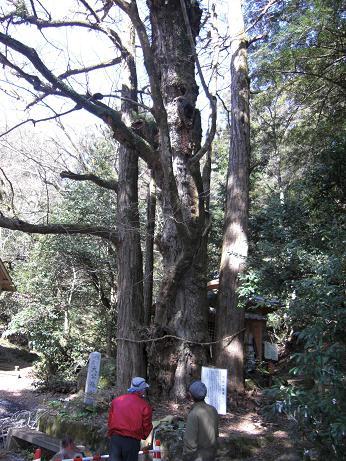 また岩屋神社へゲンカイツツジ~~_e0164643_1154180.jpg