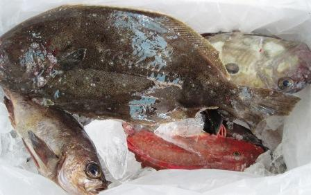大東港より 魚が届きました。_c0206545_1339595.jpg
