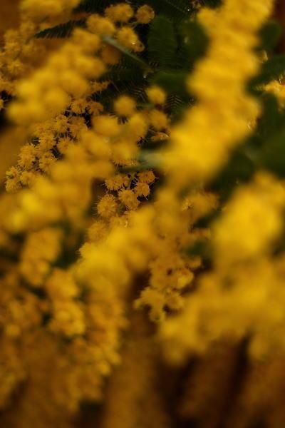 黄色い カーテン_e0155066_2148327.jpg
