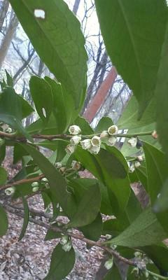 春の森の匂い_d0028272_16304215.jpg