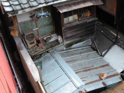 三島屋に猫がいるわけ_c0193077_21161632.jpg