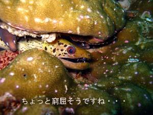 おめでとう!100本ダイバー☆_f0144385_915254.jpg