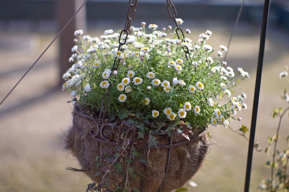 「春の気配」  Summilux 50mm F1.4_c0046489_13113160.jpg