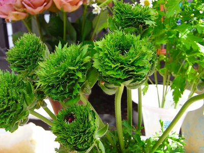 お花やさんが やって来た!!_c0207890_12503385.jpg
